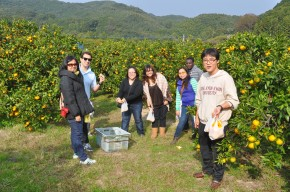 Orange Picking and Chrysanthemum Viewing Activity